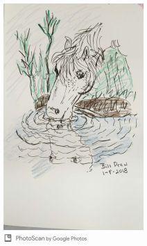 Horse reflection